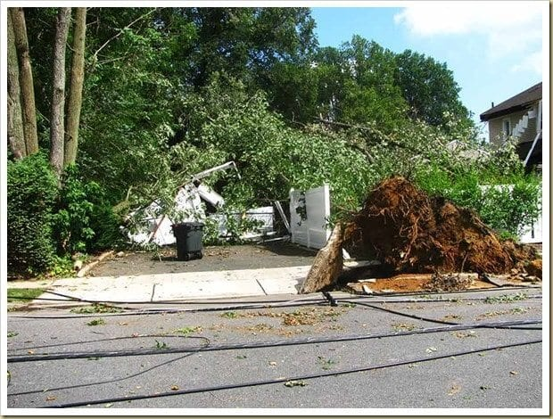 Killer trees wipe out garage
