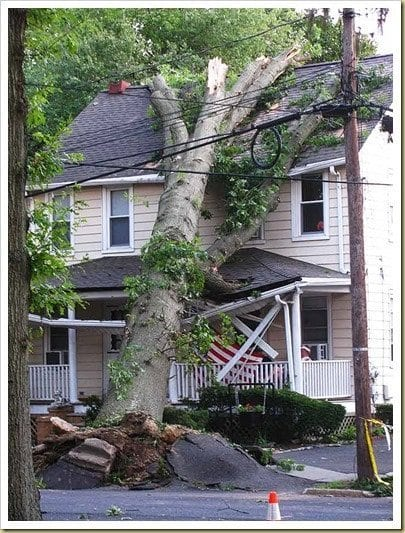 Killer trees in Freehold