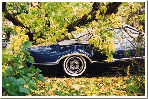 Mercury cougar smashed by killer trees